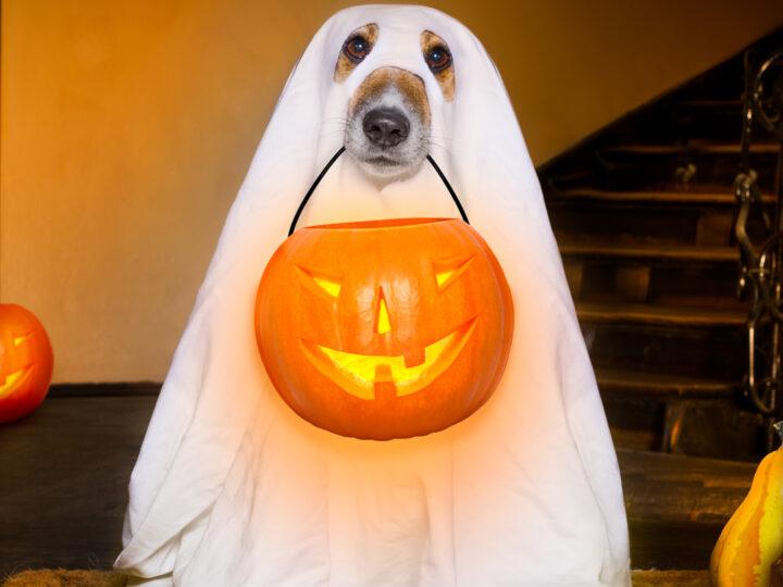 Navigating a Tricky 2020 Halloween